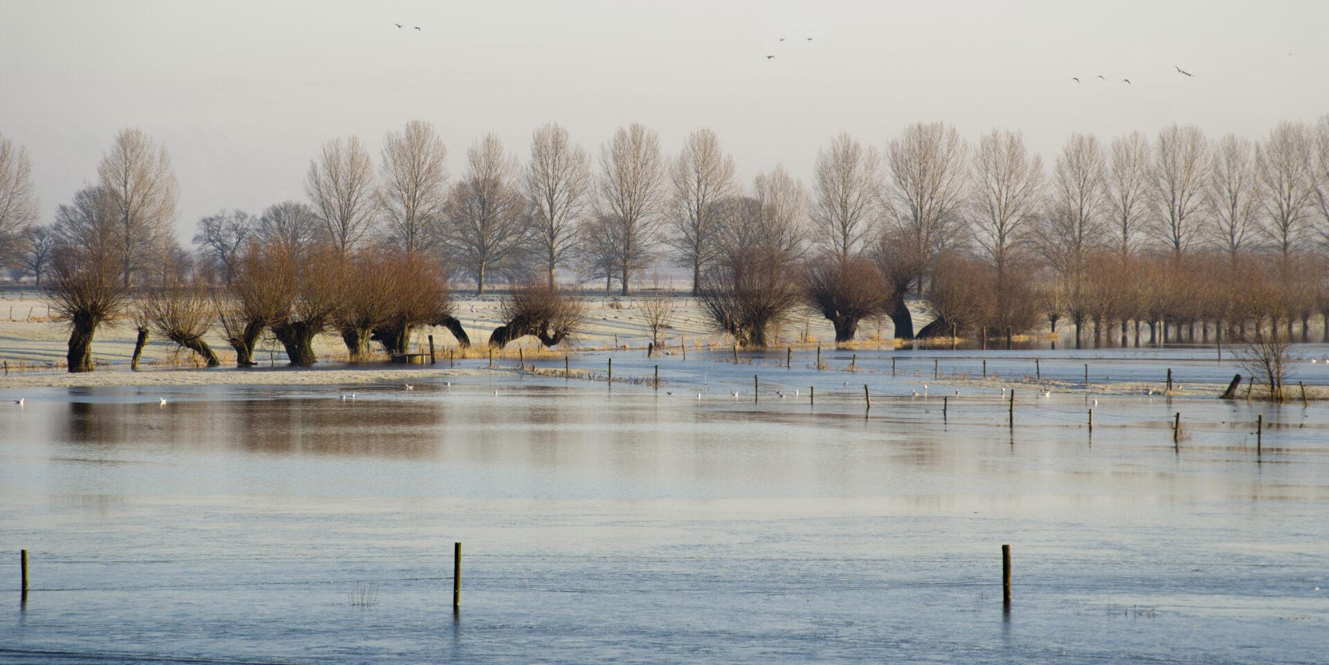 Wendbaar blijven in de Nederlandse wateropgave - Overstroming - Cratos Consulting